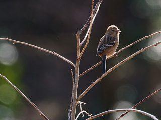 α9+SEL100400GMで撮る冬の野鳥