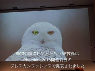 デジカメ Watch TVで『動物瞳AF』と『SEL24F14GM』のインタビュー紹介