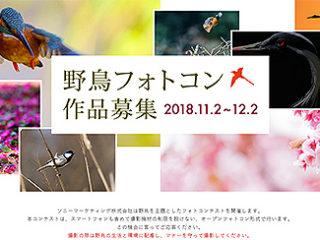【フォトコンテスト】ソニーマーケティング主催「野鳥フォトコンテスト」作品募集のご案内
