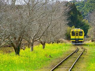 【イベント】春のローカル線 写真遠足開催のお知らせ
