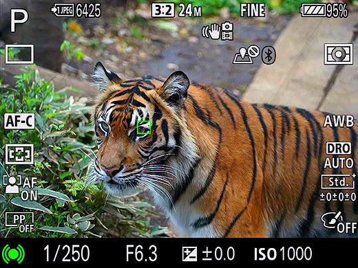 """【レビュー】上野動物園で""""α7Ⅲ""""の動物瞳AF大喜利!動画レポートもあります"""