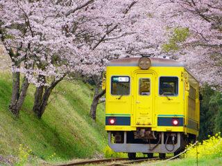 """α6400""ダブルズームレンズキット+単焦点レンズで撮る『桜といすみ鉄道の旅』"