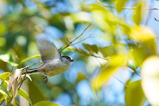 日比谷公園 野鳥撮影会レポート