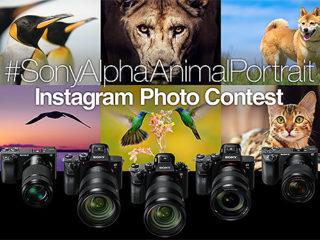 動物瞳AFを使いこなそう!Sony α シリーズ Instagram  アニマル フォトコンテスト開催決定!