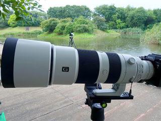 SEL200600Gで撮る清瀬金山緑地公園のカワセミ