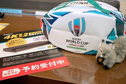いよいよ明日 ラグビーワールドカップが開幕!4K録画予約を忘れずに!