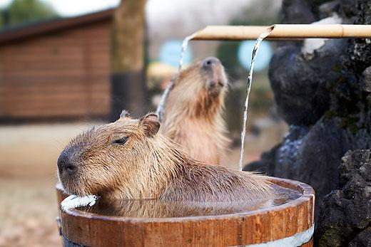 saitama-zoo_02