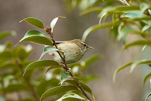 日比谷公園で野鳥撮影会