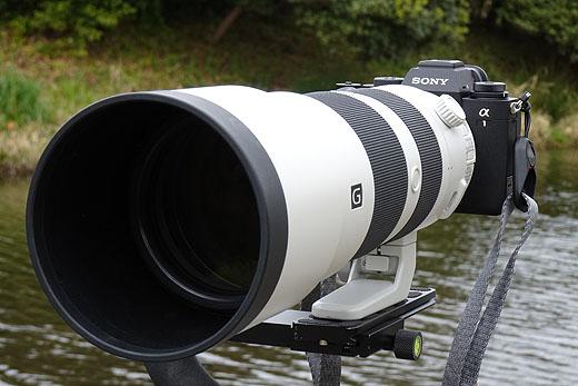 【レビュー】α1でまっさきに試したかった『鳥瞳AF』と『8K動画撮影』の話